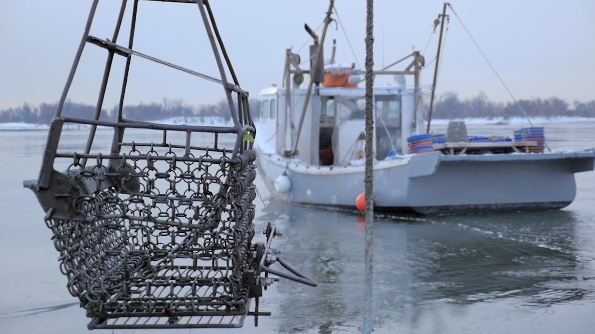 The Family Keeping Oyster Farming Alive In Connecticut
