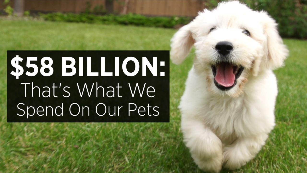 $58 Billion: That's What We Spend On Our Pets