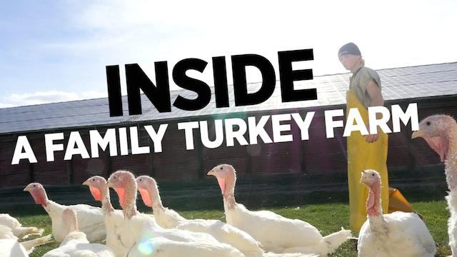 Inside A Family Turkey Farm