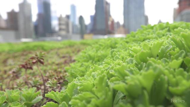 New York's Hidden Rooftop Garden